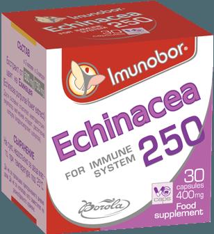 Imunobor Echinacea